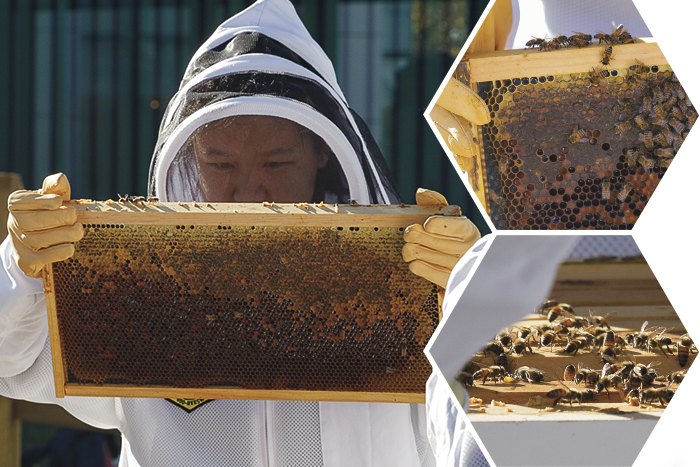 Student working in the HIve