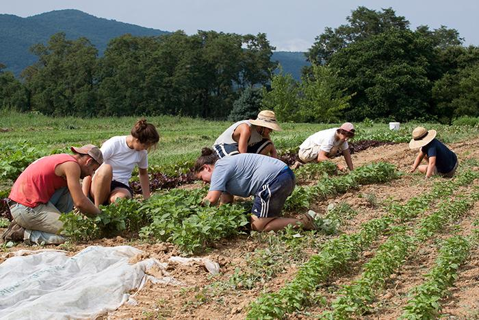 Dickinson College Organic Farm