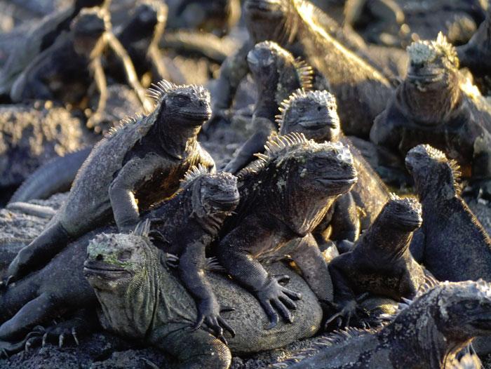 Galapagos: Darwin's Enchanted Isles: Jan. 10-19, 2020