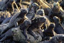 Galapagos: Darwin's Enchanted Isles