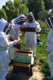 students working at the bee hive