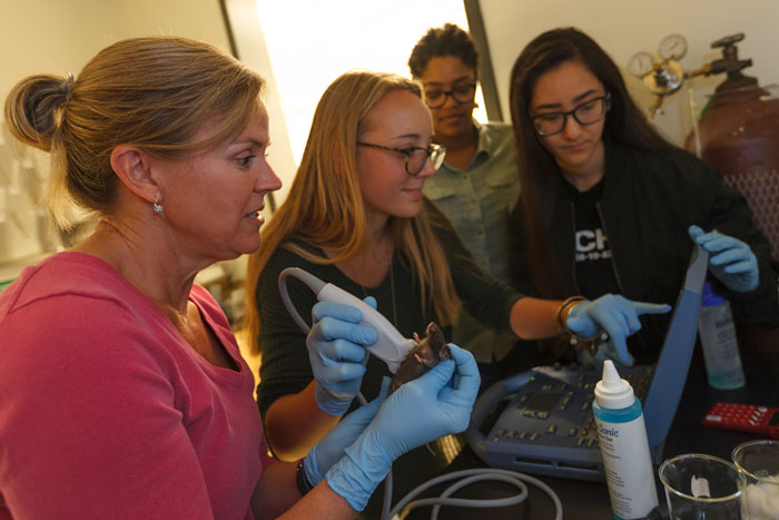 Students perform ultrasound experiments on pregnant mice.