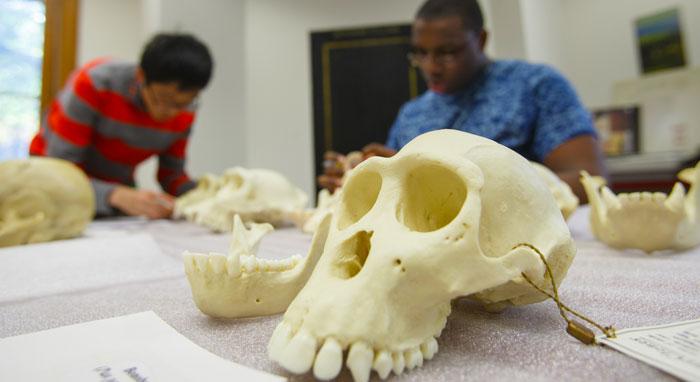 Anthropology Major Jobs 2021
