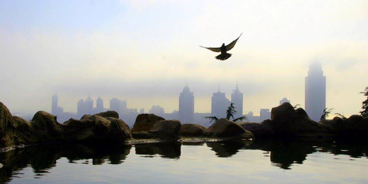 Beijing skyline from the water with a bird flying in the foreground.