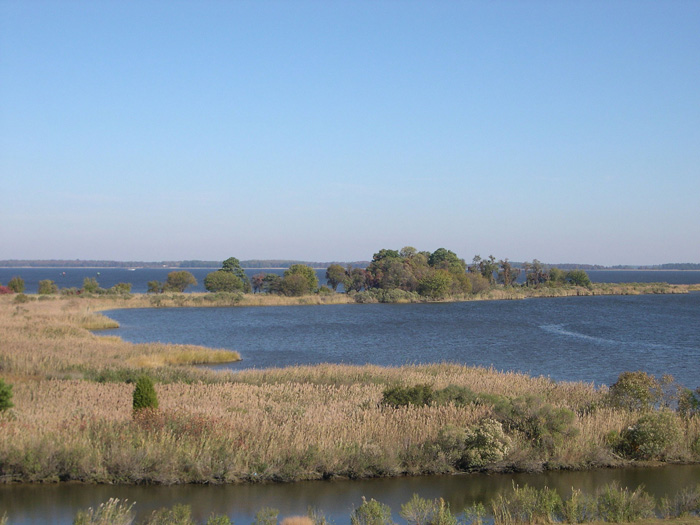 Chesapeake Bay tidal wetlands.