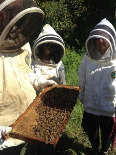 ENST_Fall_2015_Beekeeping